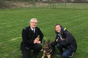 police dog finn scoops trio of trophies at trials after being stabbed