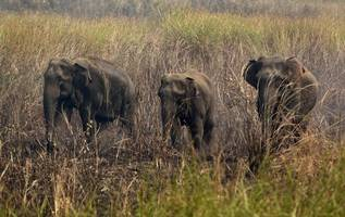 [video]: cambodian farmers rescue 11 elephants from muddy bomb crater