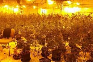 police find almost 800 cannabis plants growing in an iconic town centre chapel