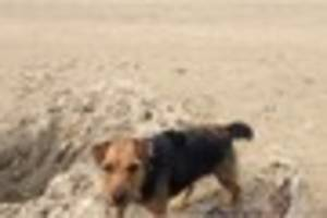 hopes raised for finding  belle after sighting in swadlincote and...