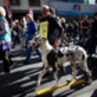 new zealanders are becoming less accepting of animal abuse
