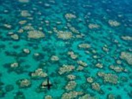 great barrier reef: two thirds hit by coral bleaching