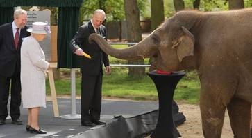 donna goes bananas on meeting queen at whipsnade zoo elephant centre launch