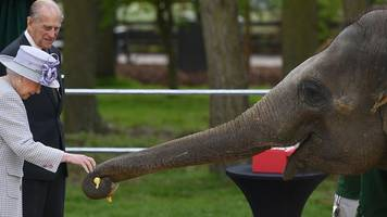 trunk call - why this elephant went banana for the queen