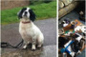 Watch what happens when a Devon drugs dog sniffs out drugs!