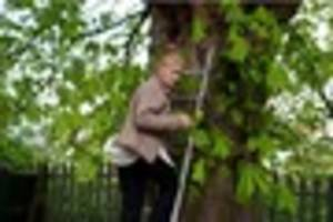 Grimsby woman's protest to save 100-year-old chestnut tree 'from...