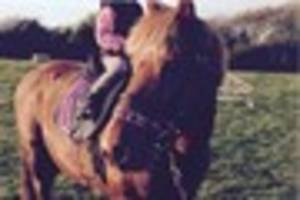 redruth pony dies after being reportedly spooked by low-flying us...