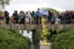 St Erth Duck Race rolls back the years to put on 'best event...
