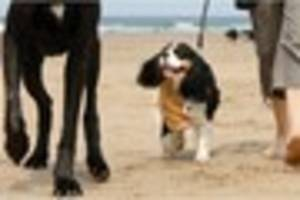 Dog friendly beaches in Cornwall: where your pets are welcome all...