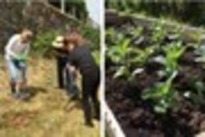 Ilfracombe fights back against community garden vandals