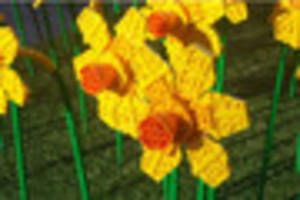 Live updates as Lego daffodils go up for grabs in Hull 2017