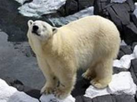 san diego seaworld polar bear suddenly dies