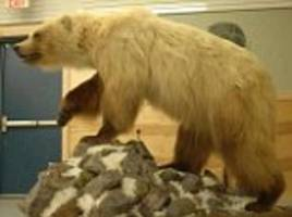 Climate change is NOT to blame for polar bear hybrids