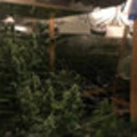happy 4/20: nypd confiscates 50 pounds of marijuana in bronx grow house