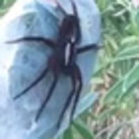 'Biggest spider I've seen': Christchurch woman's creepy crawly find