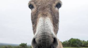 judge hopes derry death row donkey can be rehomed