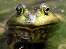 South Korean man dies after eating poisoned TOADS