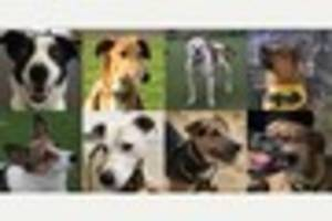 Can you give a forever home to these adorable dogs?