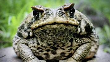South Korean man dies after eating toads