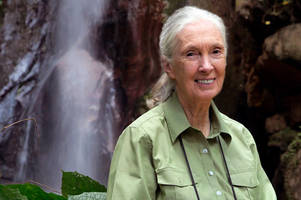 how google earth helped jane goodall save a generation of chimpanzees
