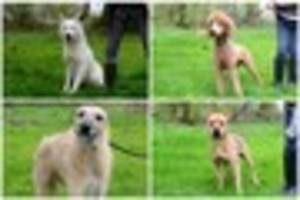 Give A Pet A Home: Adopt a dog from City Dogs' Home in Bucknall