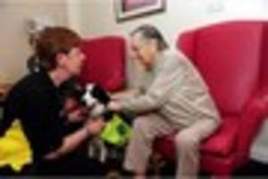 National Pet Month: How dogs can provide therapy to children and...