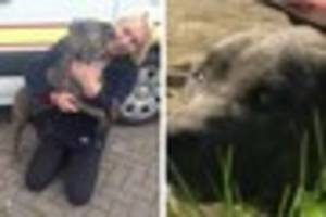 Petrified dog coaxed out from under car after five days
