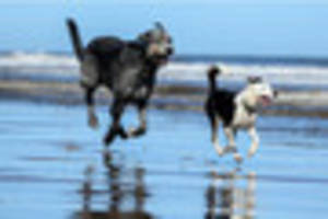 The Lincolnshire beaches where dogs are allowed