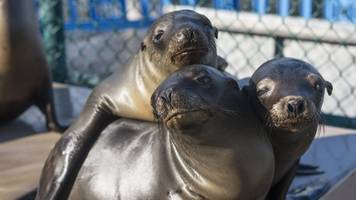 marine mammals in california are falling victim to brain-rotting toxin