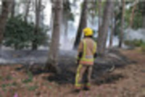 15 firefighters called to woodland fire