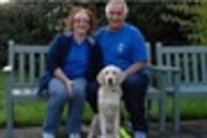 Guide Dogs for the Blind seek Harlow walkers for adorable puppies