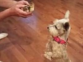 hilarious moment a puppy meets a baby duck for first time