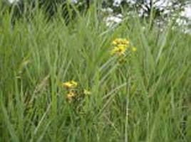 Roadside verges where our rarest plants cling on