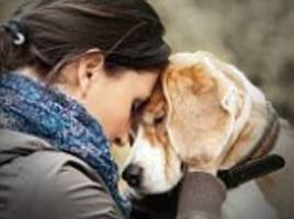 dogs exhibit emotional contagion for negative sounds