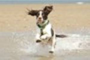 Don't fall foul of the dog ban on Devon beaches which comes into...