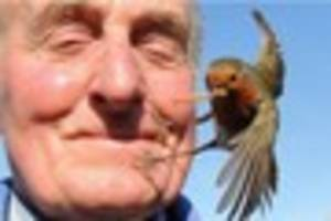 waltham abbey pensioner takes unique pictures of robins