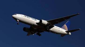 United Airlines 'saddened' after giant rabbit dies on flight to US