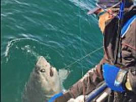 Man reels in a monster 450lb SHARK in Cornwall