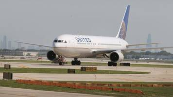 United Airlines Under Fire Again After Giant Rabbit Dies On Flight