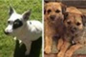 three dogs lost or stolen in sherborne area as police appeal for...