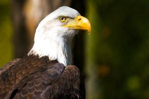 15 charged in south dakota 'chop shop' for eagles