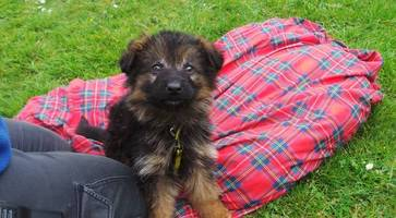 Two puppies abandoned at Northern Ireland roadside - can you give them a home?