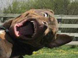 devil dog pulls a hilarious face as teenage owner hugs him