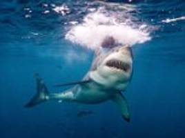 French woman attacked by shark at New Zealand's Curio Bay