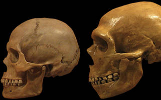 ancient human dna found in ice age caves — even when bones were missing