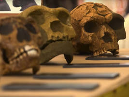 humans may have come to america 100,000 years earlier than we thought: study