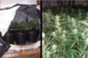 600-plant cannabis farm found after police stop stolen car