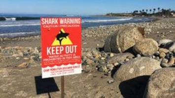 'the back of her leg was kind of missing'; woman attacked by shark in california