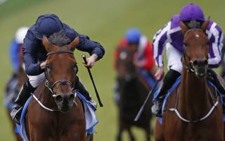 horse racing betting tips: winter may prevent rhododendron from blooming