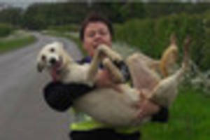 All in the line of duty! Police officer carries limping dog to...